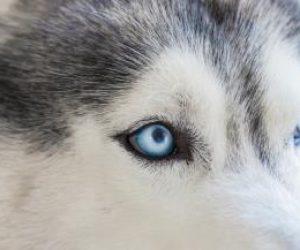 https://oftaderm.cl/wp-content/uploads/2018/05/oftalmologia-veterinaria-perros-300x250.jpg
